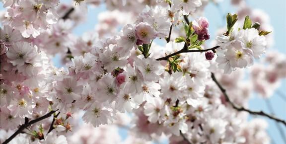 primavera_idueroccoli