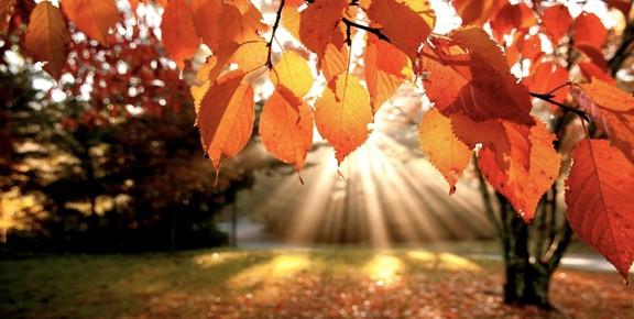 autunno_idueroccoli1